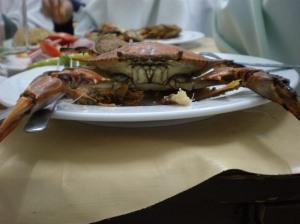 kepiting ~ kaburia