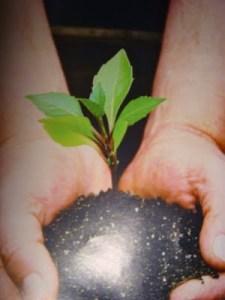 Proses tarbiyah umpama menyemai benih, menjaga dan memeliharanya sehingga menjadi sebatang pokok yang rendang, hidup dan subur.
